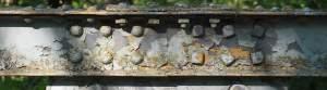 Rust Removal Steel Beams